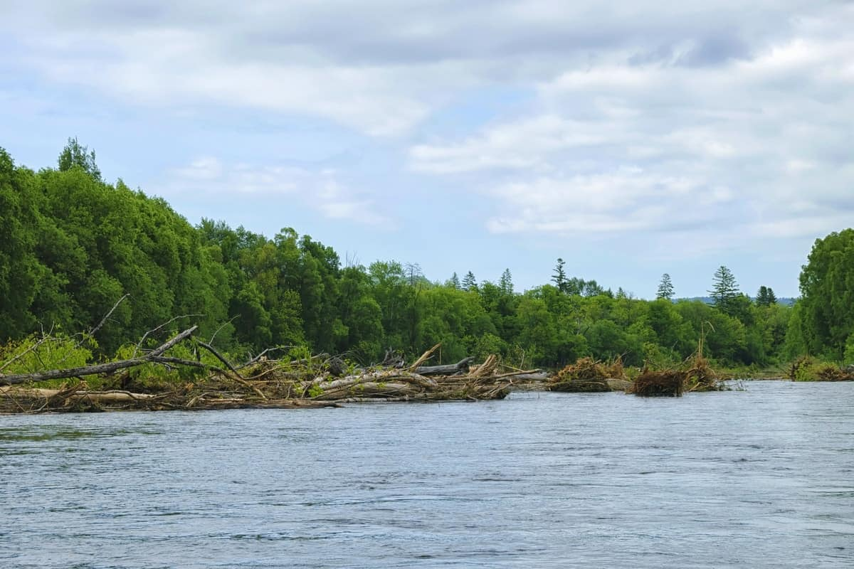 This image has an empty alt attribute; its file name is Lake-with-trees-on-shoreline-Large.jpg